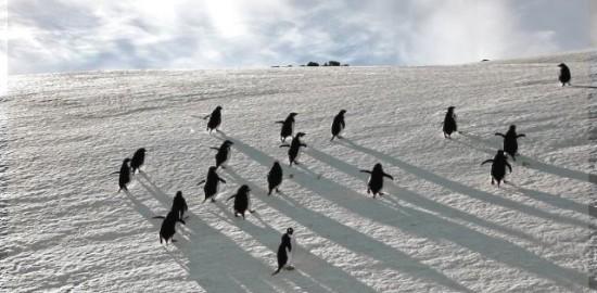 2013/01/Pinguini-di-adelia1.jpg